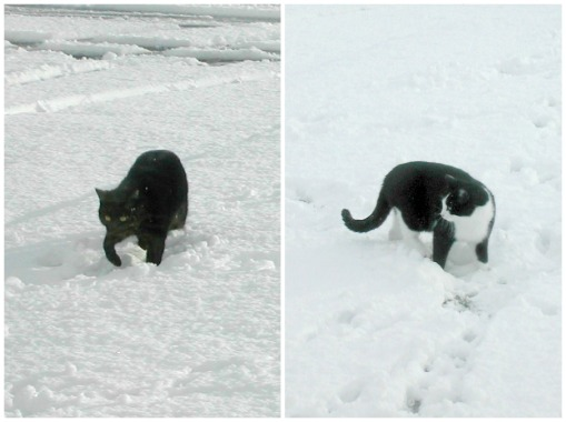 Cats in the Snow 2 Collage