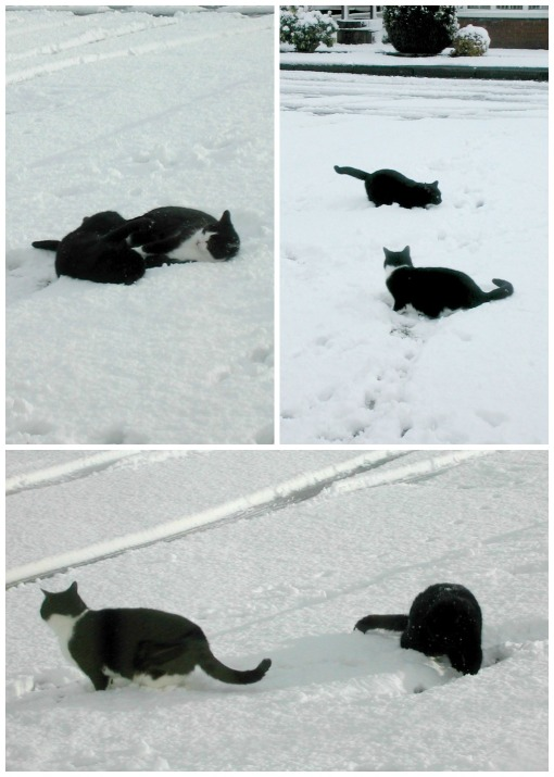 Cats in the Snow Collage