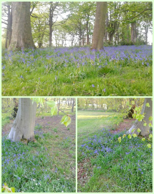 Bluebell 1 Collage