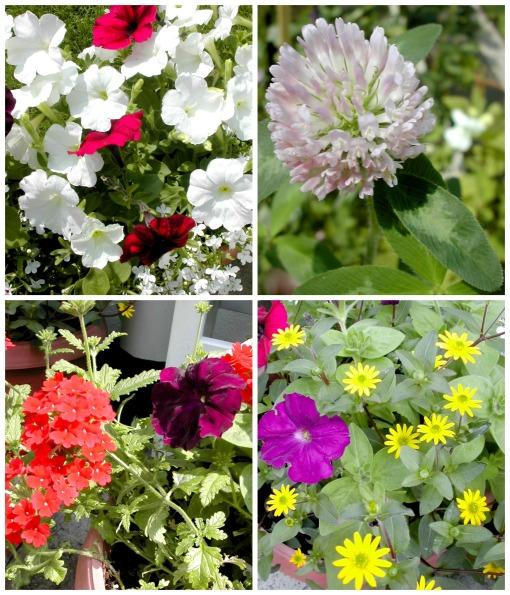 july garden 2 Collage